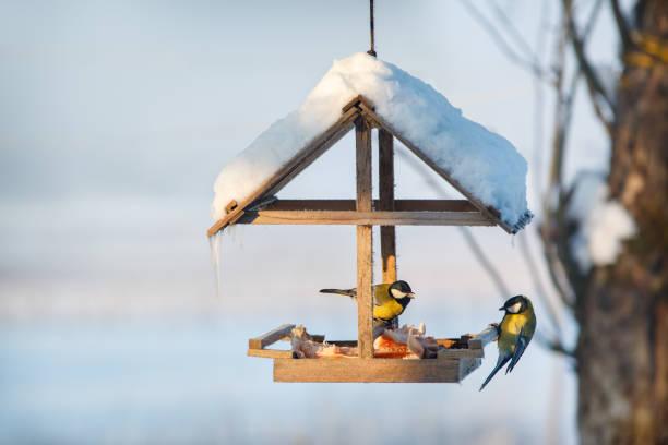 Two tit in the snowy winter bird feeder picture id1049190004?b=1&k=6&m=1049190004&s=612x612&w=0&h=biralfqkohg0zipnbuedig92yyauqgcwx1z7ggyu988=