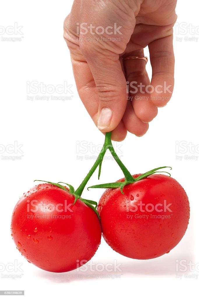 Dos Tomate en mano aislado sobre un fondo blanco foto de stock libre de derechos