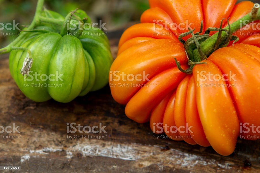 two tomatoes series of raf on a log royalty-free stock photo