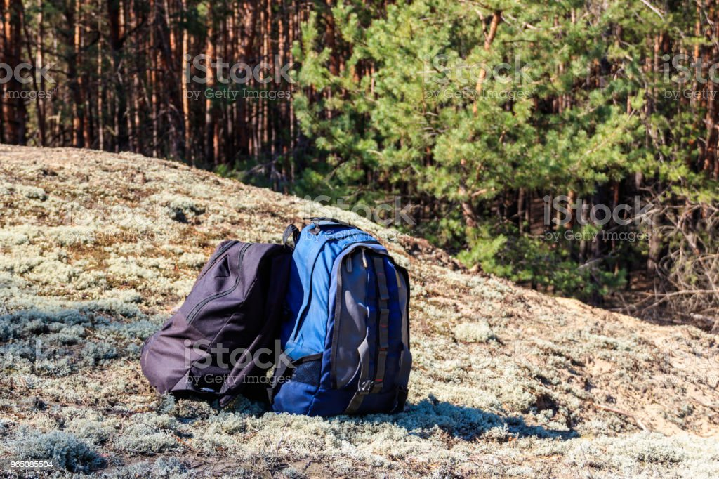 Two tourist backpacks on the glade in pine forest zbiór zdjęć royalty-free