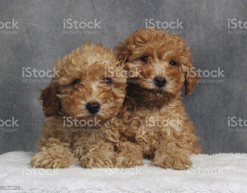 Two Toys royalty-free stock photo
