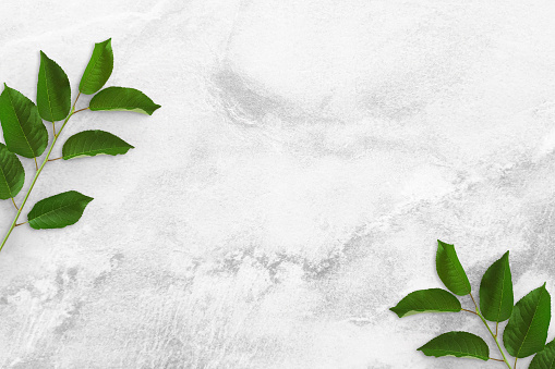 Two tree branches with green leaves at the edges on a concrete table. Old white and gray concrete background. Advertising board, poster mockup for your design. Flat lay, top view, copy space