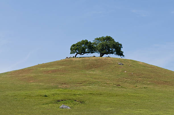 Two tree hill stock photo