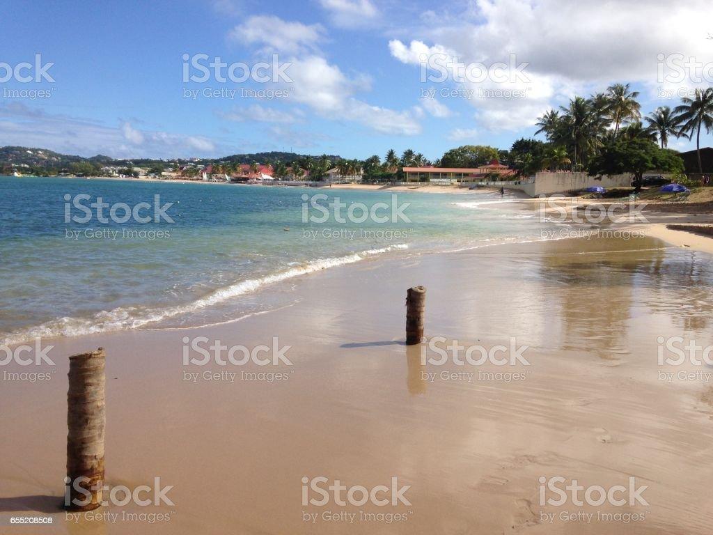 Two tree stumps on beach stock photo