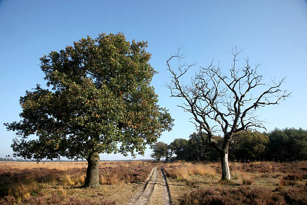 two trees and a path - dead plant stock photos and pictures
