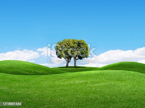 istock Two Trees Combining Into One 1219931434