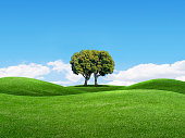 Two trees combine to form one tree as the grow on a rolling set of grass covered hills under idyllic blue skies.