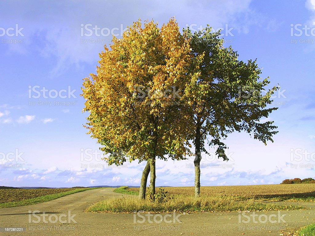 two trees fall in love royalty-free stock photo