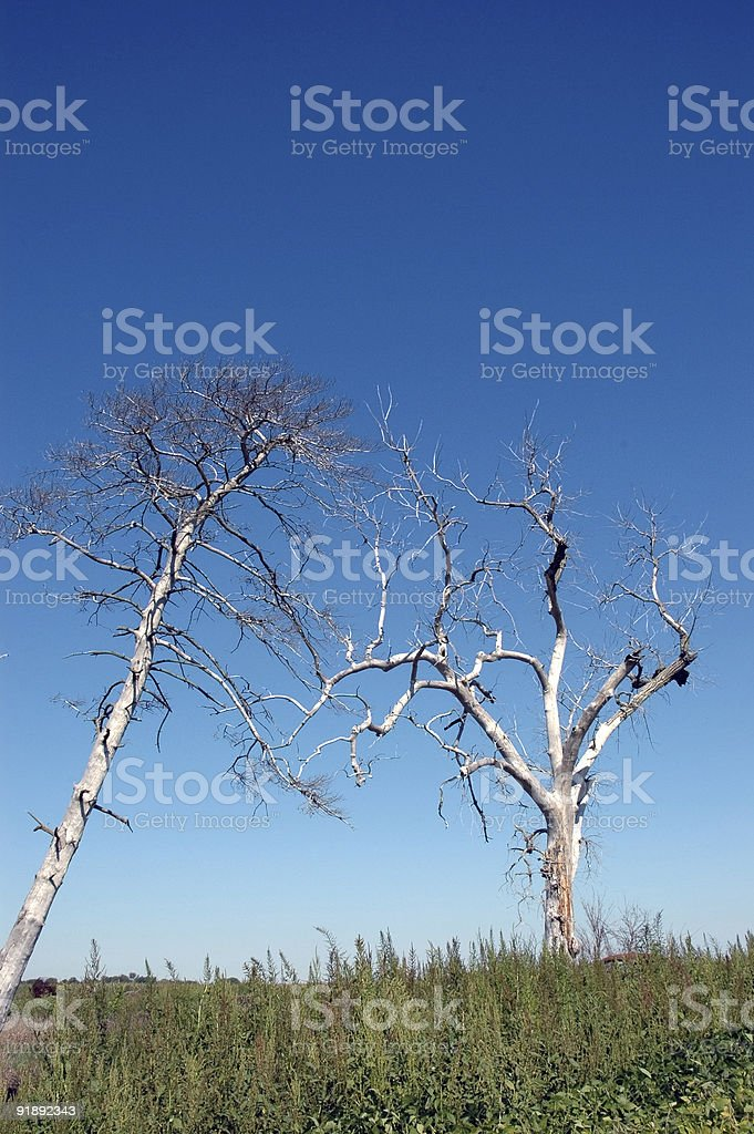 Two Trees in Death stock photo