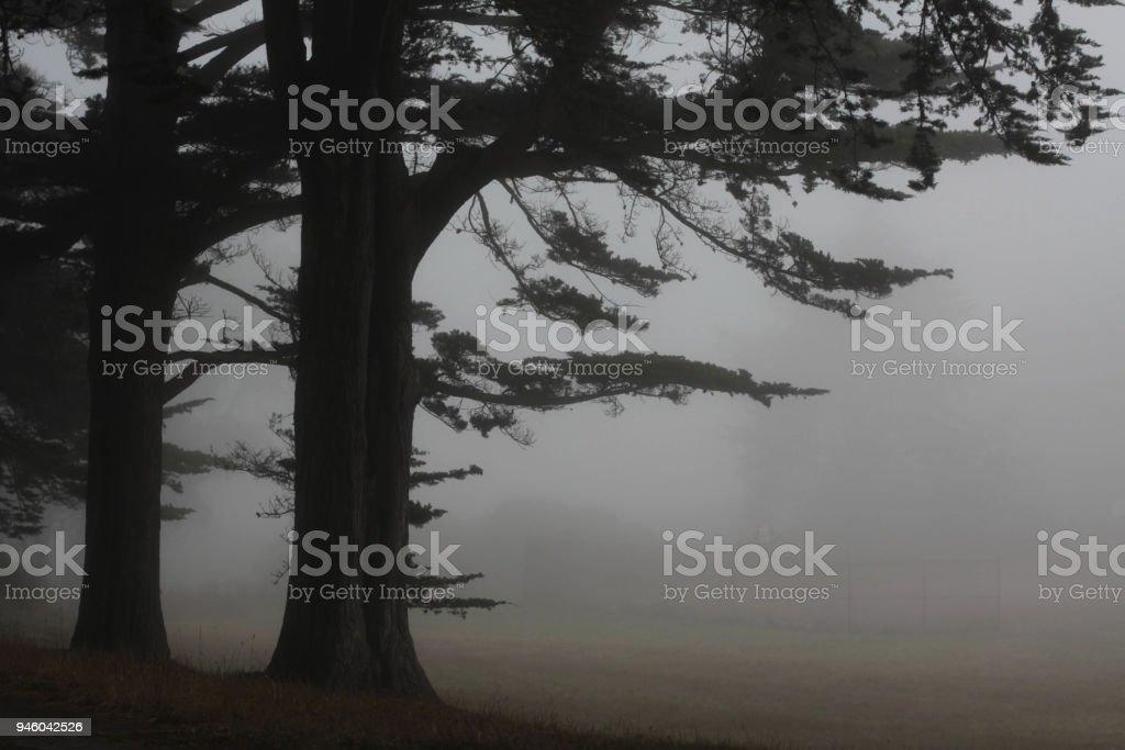 Zwei Bäume im Nebel – Foto