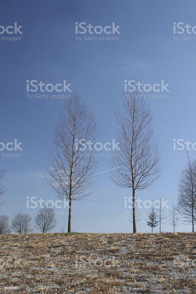 Dos árboles foto de stock libre de derechos
