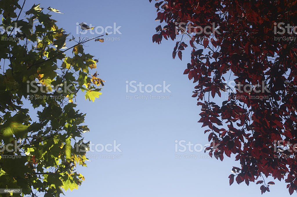 Two autumnal trees with river of sky stock photo