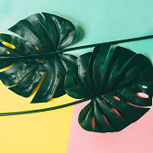 Two tropical green leaves layout on colorful background.  Minimalist, flat lay, top view