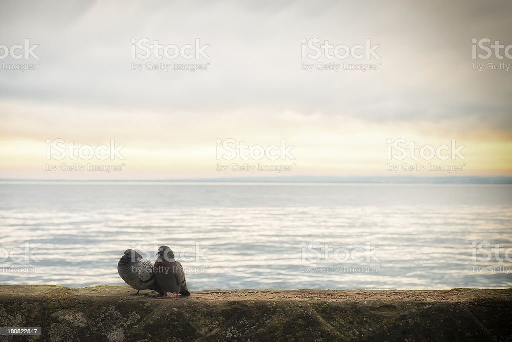 two turtle doves in love very early morning mood royalty-free stock photo