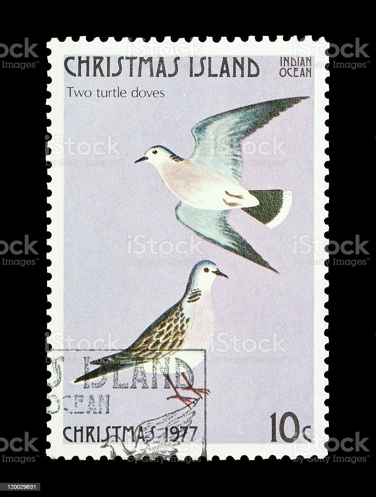 two turtle doves stock photo