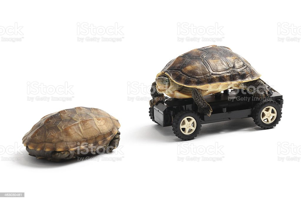 Two Turtles with Toy Car stock photo