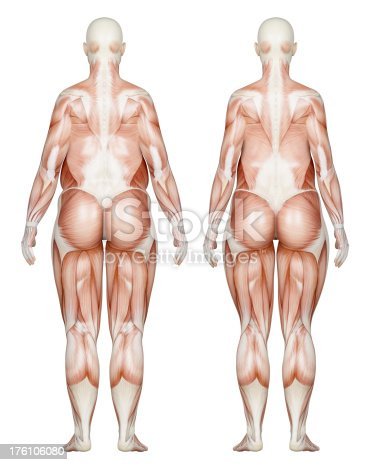 496193203istockphoto Two types of feminine bodies overweight, focus on muscles 176106080