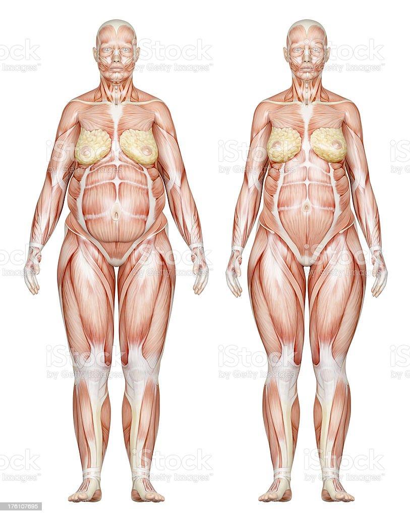 Ausgezeichnet Weibliche Körper Muskeln Bilder - Menschliche Anatomie ...