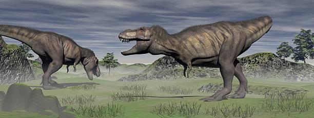 Two tyrannosaurus stock photo