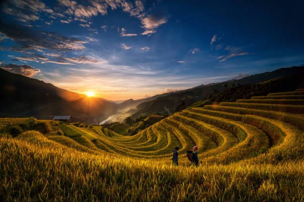 Two undefined Vietnamese Hmong are walking in the fantastic landscape of rice field terrace for prepare harvest when sunrise at Northwest Vietnam. Mu Cang Chai, Yen Bai province, Vietnam Two undefined Vietnamese Hmong are walking in the fantastic landscape of rice field terrace for prepare harvest when sunrise at Northwest Vietnam. Mu Cang Chai, Yen Bai province, Vietnam indochina stock pictures, royalty-free photos & images