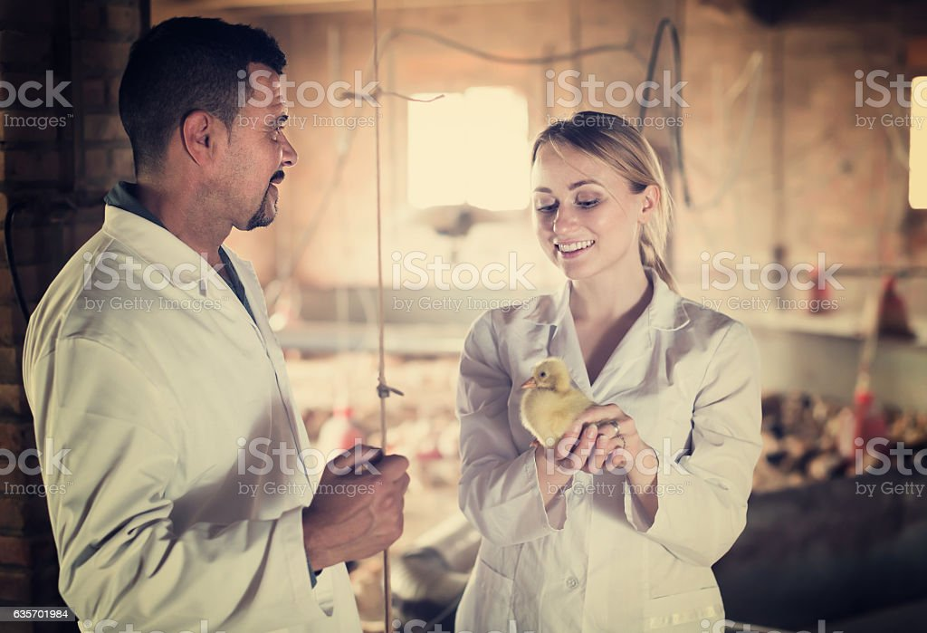 Two veterinarian talking and having duckling royalty-free stock photo