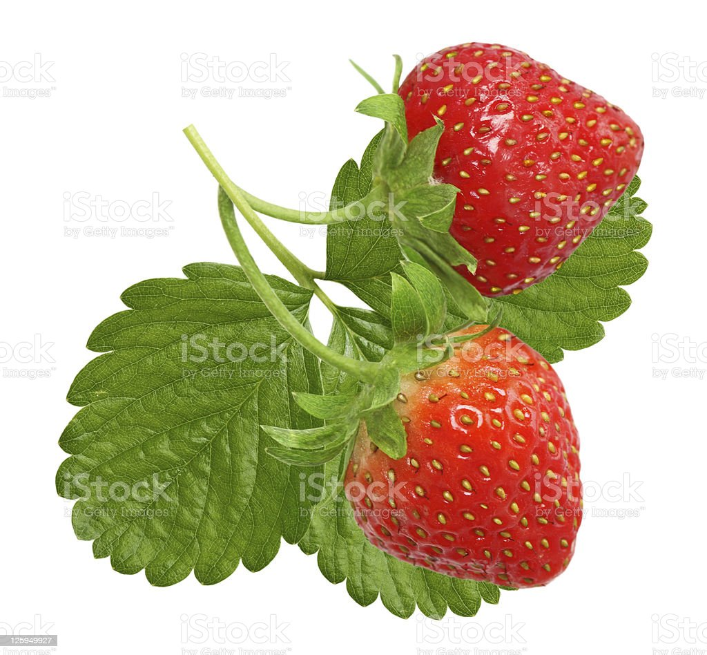 Two vibrant red strawberries on a stalk with leaves stock photo