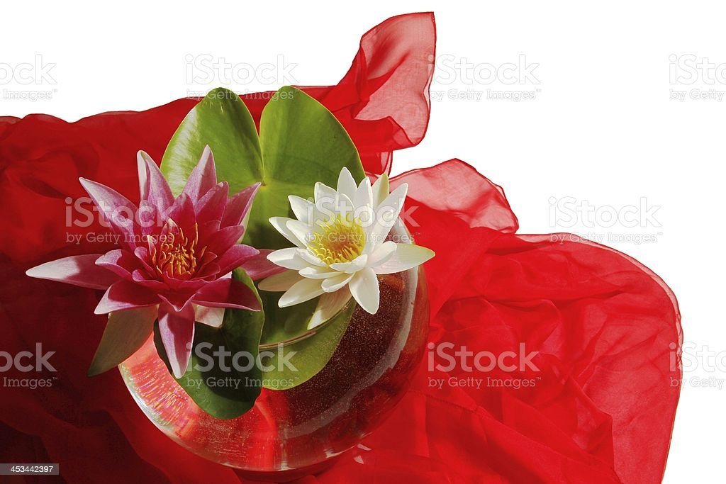 two water lilies stock photo