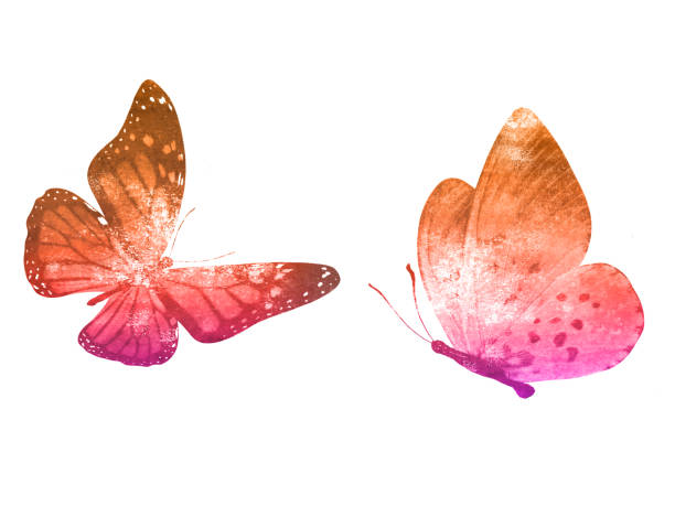 Two watercolor butterflies isolated on a white background picture id1195952994?b=1&k=6&m=1195952994&s=612x612&w=0&h=pcmw2mxdccvo9mpgiwlmylvzoezo61svwfzgbb0lspu=