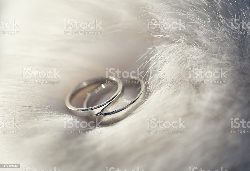 Two wedding rings on white fur. royalty-free stock photo