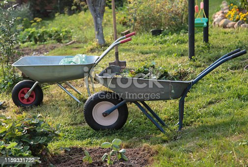 istock Two  wheelbarrows with saplings in the farm 1159331722