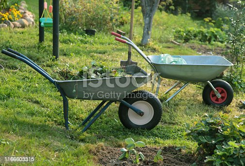 istock Two  wheelbarrows with saplings in the farm 1166603315
