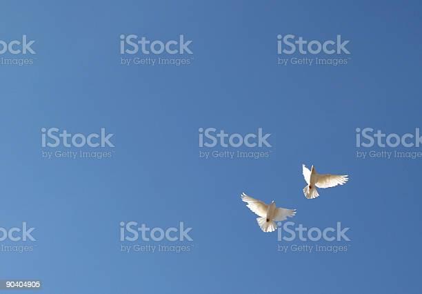 Two white doves flying in blue sky picture id90404905?b=1&k=6&m=90404905&s=612x612&h=im68i93yuwgg3nrdrwylyy7pex2qaqd1tqdnqbwaxz0=