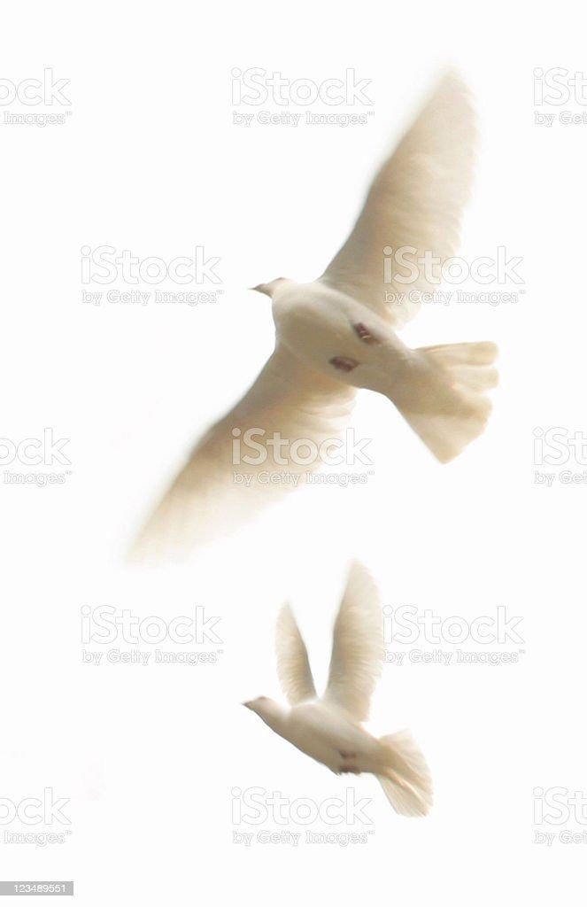 Two White Doves stock photo