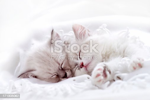 Two white kitten sleeping together