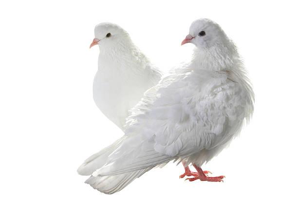 Tauben Bilder