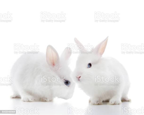 Two white rabbits picture id643346568?b=1&k=6&m=643346568&s=612x612&h=nizmxl3z luk5prf2d1ytntelvdu4hk agwcn 85ohs=