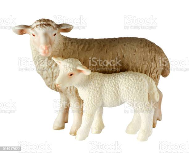 Two white toy lambs standing fulllength isolated on white background picture id916917622?b=1&k=6&m=916917622&s=612x612&h=zqvz6rznttusw8x5bba2gukorbolpwyvdbrc5h0m0wi=