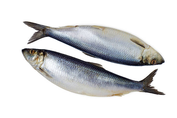 two whole herring  isolated - herring stock photos and pictures