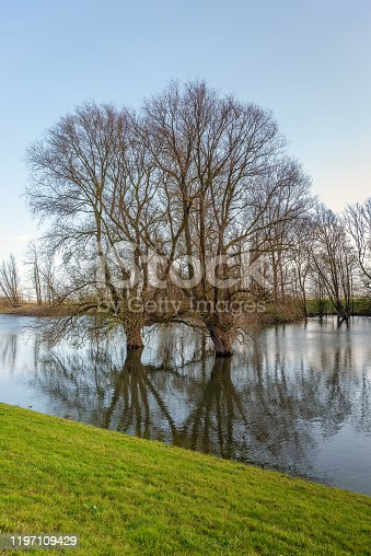 istock Two willow trees in the water 1197109429