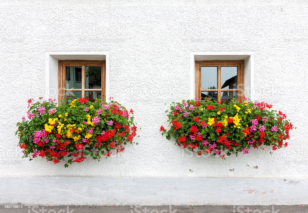 Two windows with flowers stock photo