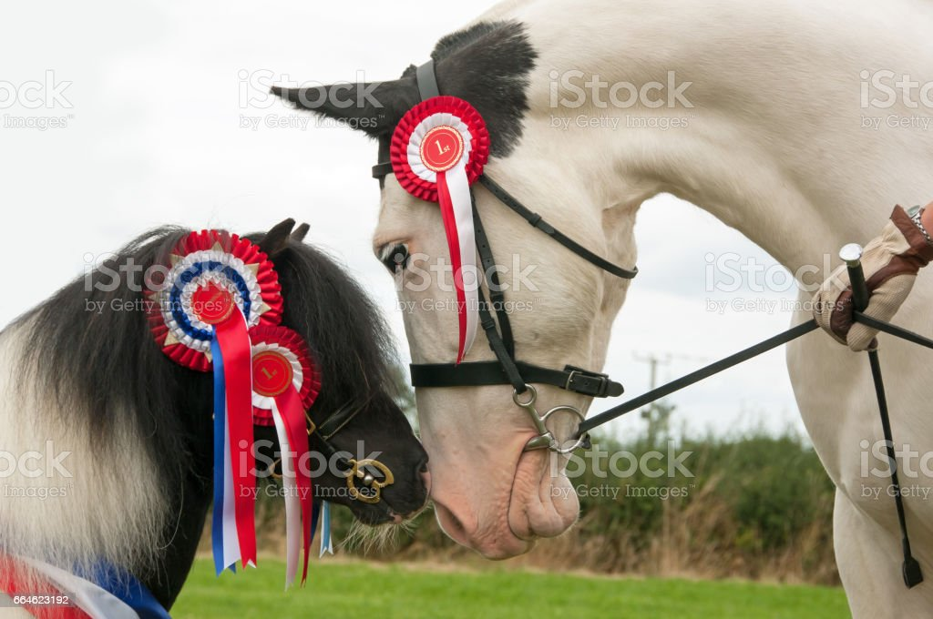 Two winners stock photo