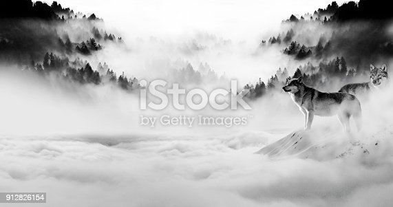 istock two wolves stand out as night fell and the fog rolled into the darkness 912826154