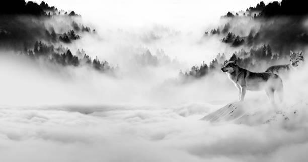 två vargar utmärker sig när natten föll och dimman rullade in i mörkret - varg bildbanksfoton och bilder