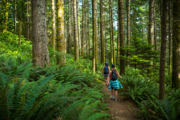 Two women hiking Ripple Rock trail on Vancouver Island. Hiking through rain forest on Ripple Rock trail, Vancouver Island. vancouver island stock pictures, royalty-free photos & images