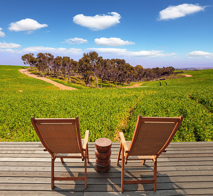 Two wooden deck chairs for relaxing at the edge of the field. Fields of flowers in the bright southern sun. Lovely warm day. Israel. Negev desert.
