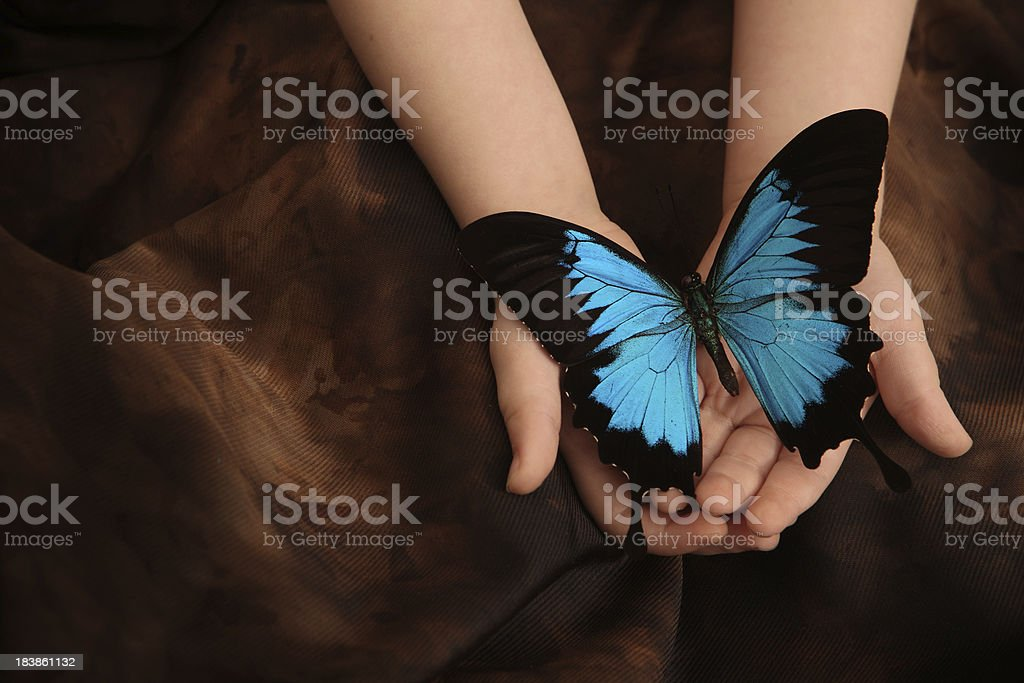 Two Year Old Holding Butterfly 2 stock photo