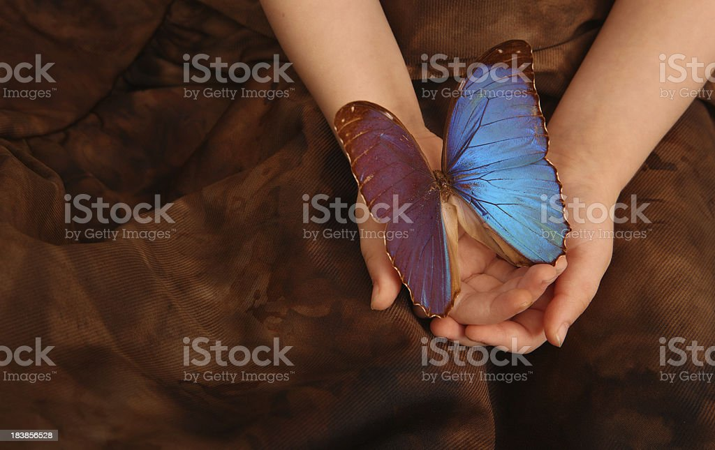 Two Year Old Holding Butterfly stock photo