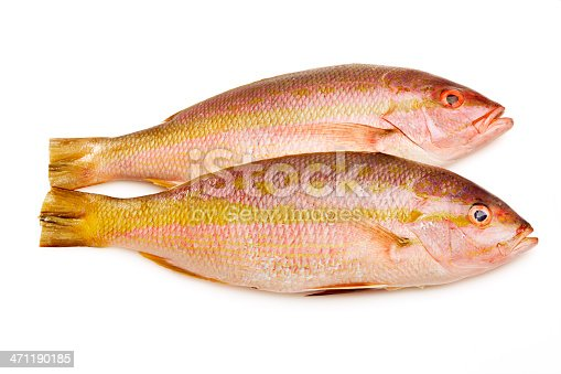 Subject: Two cleaned and prepared fresh yellow banded red snapper isolated on a white background.