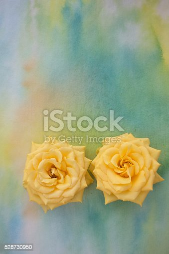 Two yellow roses in bloom isolated on watercolor painting