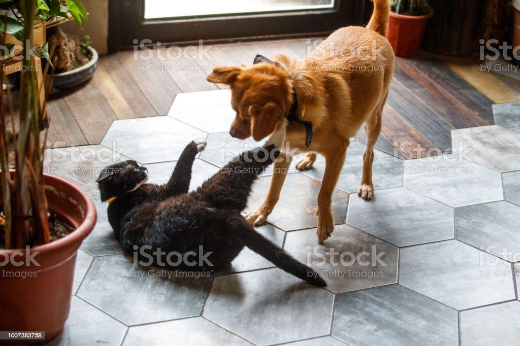 pets,playful,